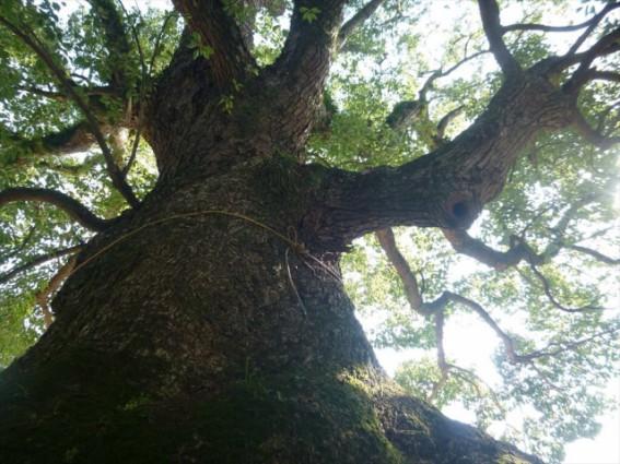 無垢の木の家なら、美しい経年変化も楽しめます。