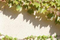 塗り壁といえば、漆喰?珪藻土?