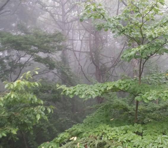 緑がすずやかな山梨県