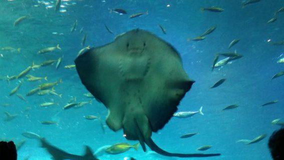 夏の水族館は涼しいですね~