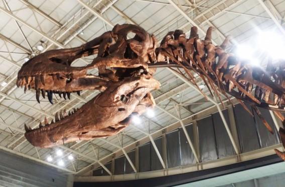 恐竜は約2億年前から地球にいました