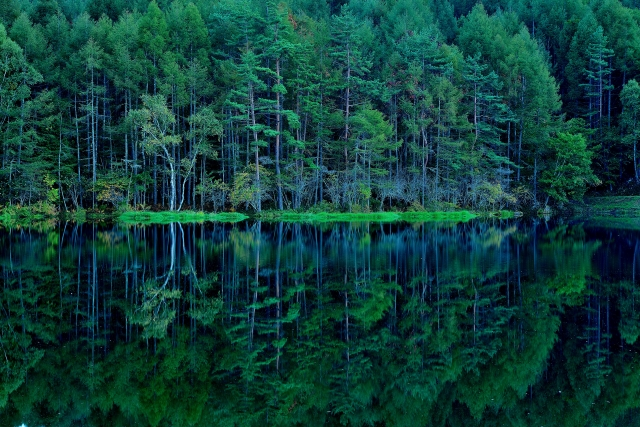木の種類によって、その特徴はさまざまです。