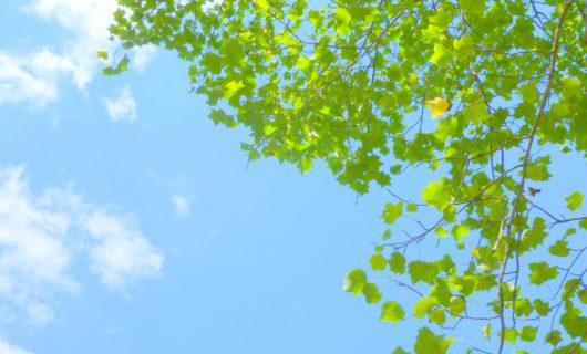 自然素材の家 「快適」と感じる理由