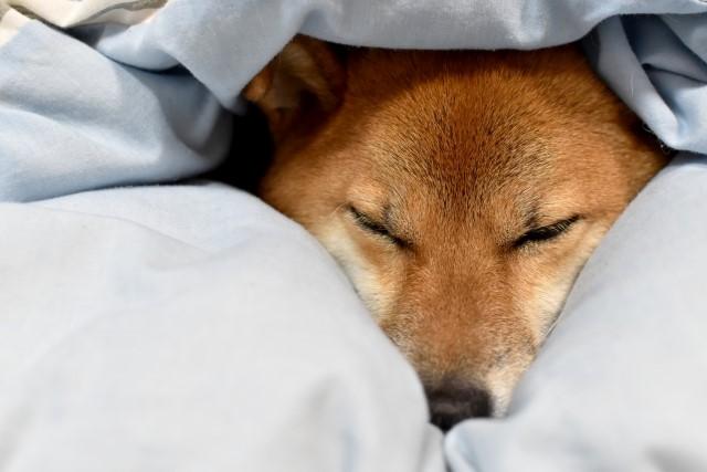 羽毛布団には空気がたくさん含まれているから暖かい
