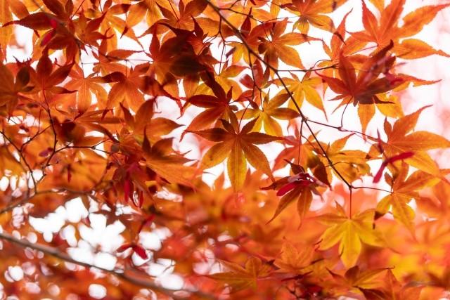 日本には四季がある