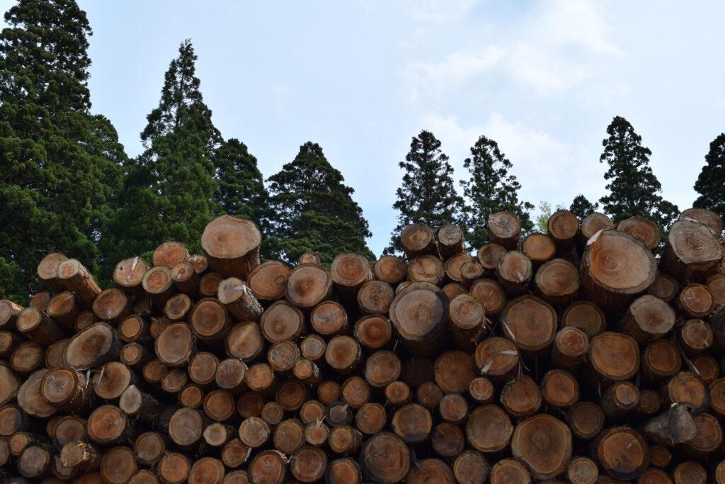 伐採した樹木