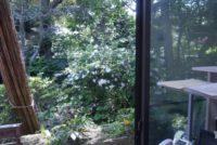 スタッフルームの窓の外はツツジが満開