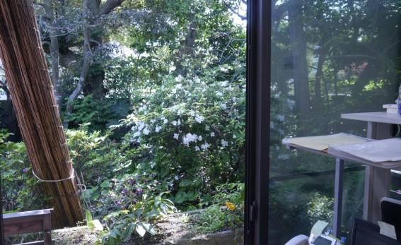 スタッフルームの窓の外はツツジが満開。