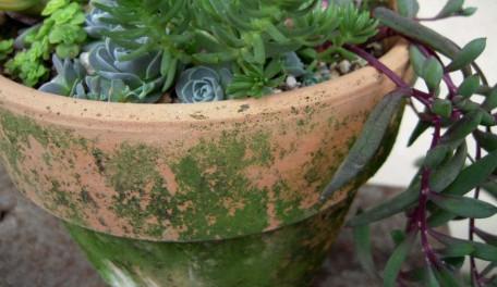 苔がむして味わい深く変化した鉢