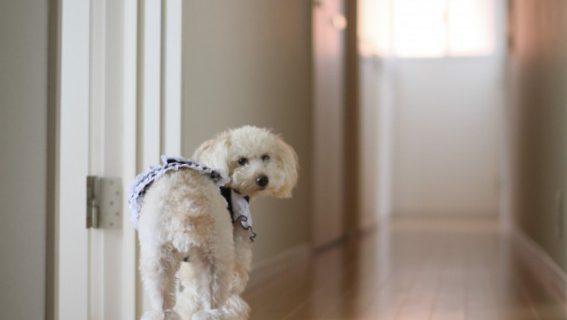 すべりにくい床なら、ペットも喜びますね