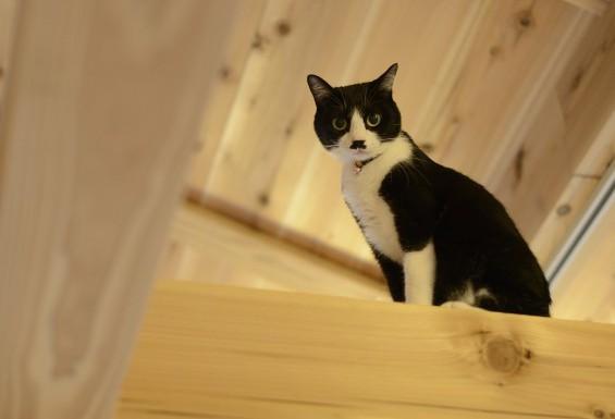 新築のお宅の猫