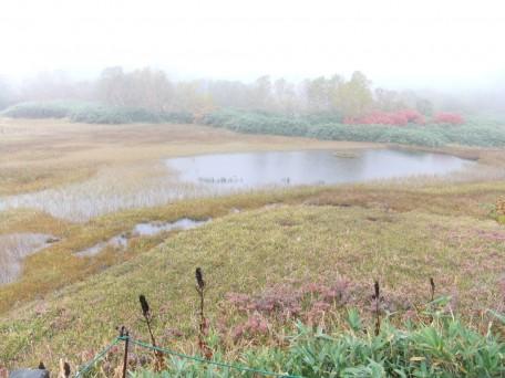 深い霧の立ち込める、色づき始めた湿原はとても幻想的。