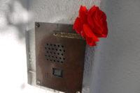 玄関にバラの花